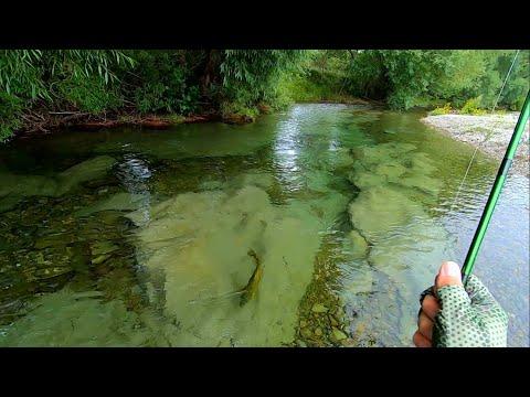 Fluefiskeri efter store bækørreder i New Zealand