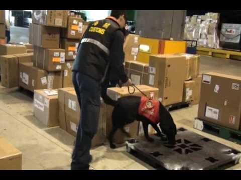 Bravo-Cargo