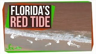 Why Florida's Red Tide Is Killing So Many Animals | SciShow News - Video Youtube