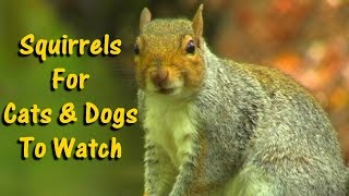 Videos for Dogs To Watch : Squirrels - Videos für Hunde