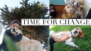 Leaving My Doggy Daycare Job | Day In My Life 🐾