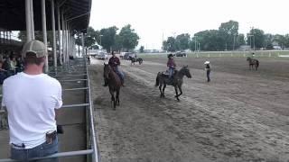 Horse Judging CDE