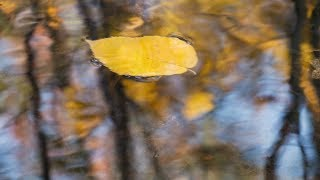 """Peaceful Music, Relaxing Music,  Instrumental Music, """"Cozy Autumn"""" By Tim Janis"""