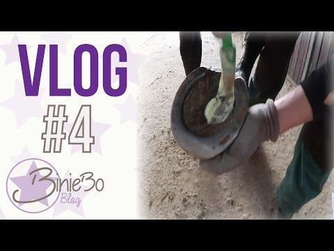 meistermisters Hufpflege & Geschenke #VLOG [4] |BinieBo