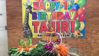 Tajiri's 1st Birthday Party
