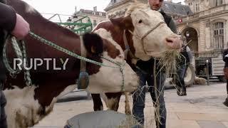 Francja: Wściekli rolnicy protestują przeciwko diecie bezmięsnej w szkołach w Lyonie