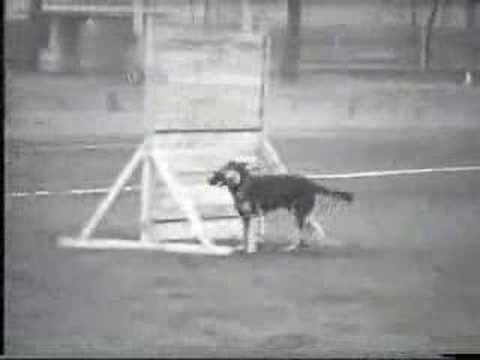 Preview video Real Schutzhund c2
