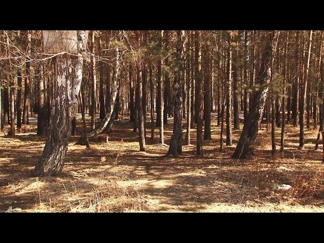 Добровольцы помогут тушить лесные пожары