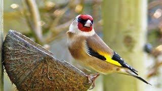 My Garden Birds - Garden Bird Identification ( See List Below )