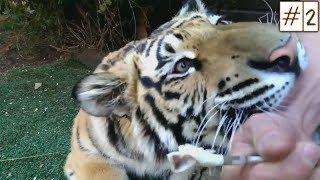 Приколы c Животными  2018 | Смешные Видео с Собаками  Кошками  и  Другими Животными #2