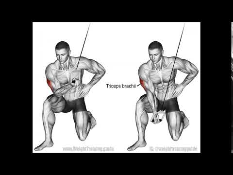 Cable Concentration Triceps Extension 990x773