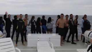 Orcas on the coast of Ilha Grande/RJ