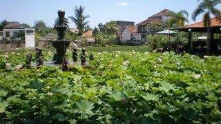 癒しのガムラン♪バリ島ウブド周辺の緑な風景balirelaxhealing