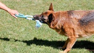 Sajan Dog Caring And Training Academy,kottayam,pala . Call 09946515222