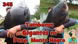 Programa Fishingtur na TV 345 - Pesqueiro Monte Negro