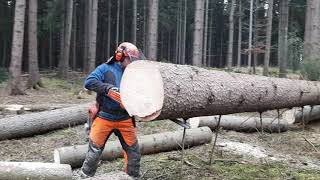 Lumberjack Little Harvester and Very Good Work in the Forest