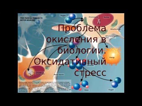 ВИТАСИЛЫ - КОМПЛЕКС АМИНОКИСЛОТ, ВИТАМИНОВ, МИКРОЭЛЕМЕНТОВ И АНТИОКСИДАНТОВ