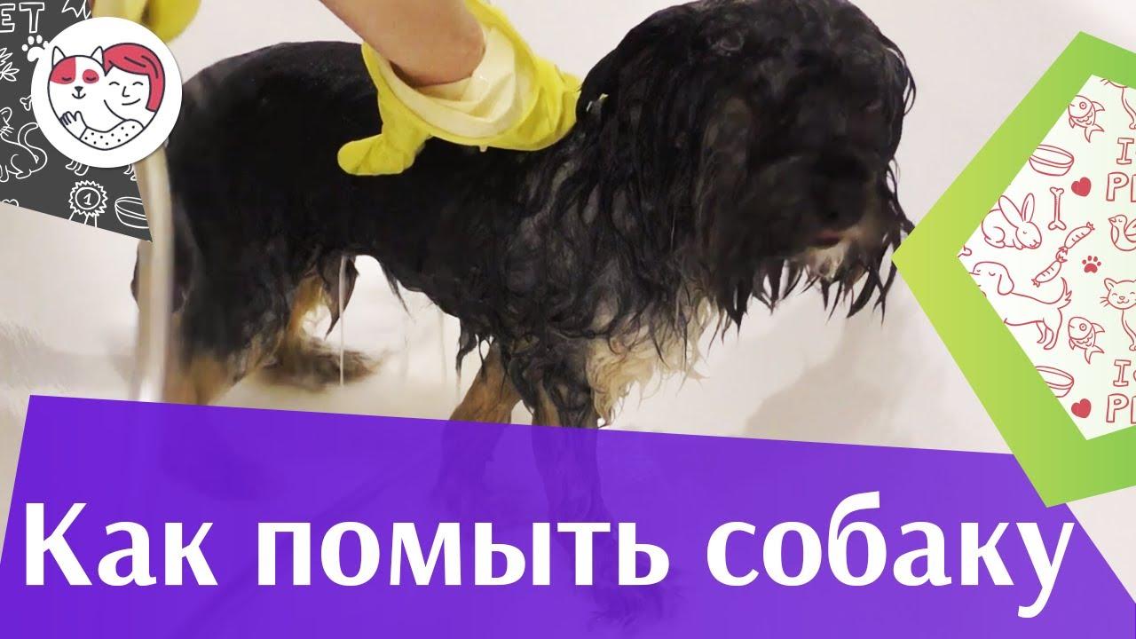 5 правил мытья собаки  на ilikpet