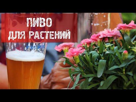 Пиво для растений.