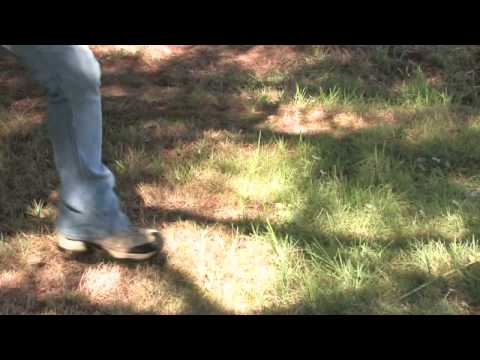 About Plants & Gardens : How To Get Grass To Grow Under A Tree Mp3