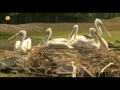 Geboortegolf in Zoo Park Overloon