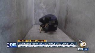 "Aggressive 'alpha roll"" dog training technique questioned"