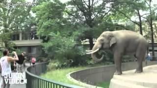 Слон в зоопарке. Прикол про слона.