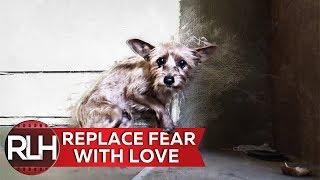 Real Life Hero Saving a Terrified Abandoned Dog