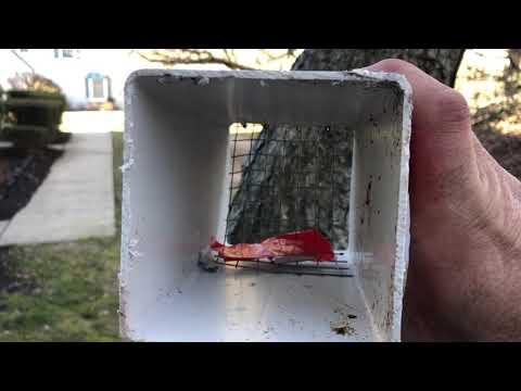 Birds Nesting in Bathroom Exhaust Vent in Hamilton Township, NJ