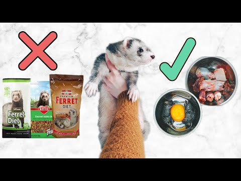 , title : 'Ferret Diet   What You Need To Know Before Getting A Ferret Kit
