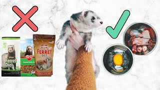 Ferret Diet | What You Need To Know Before Getting A Ferret Kit