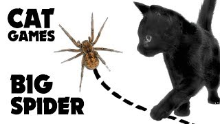 CAT GAMES ★ CATCH BIG SPIDER on the screen