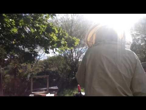 Czy możliwe jest, aby współpracować z żylakami Nordic walking