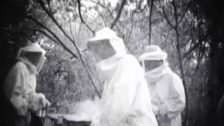 Nightmare Of Bees-FilmConvert.