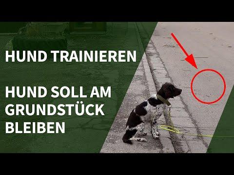 Hund trainieren ► Hund soll am Grundstück bleiben - ohne Zaun