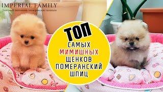 Смотреть онлайн Самые милые щенята во всем мире