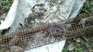 bẫy rắn,#24 con rắn độc cực hiếm, và sự sơ suất, xuýt mất mạng của nghề bẫy rắn