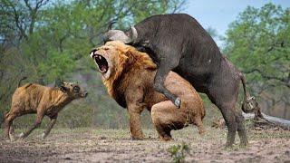 Самые Беспощадные Схватки Животных!