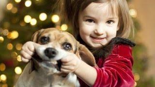 Поздравление с РОЖДЕСТВОМ 2017. Смешные животные (кошки и собаки)