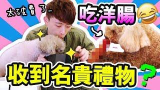 【波友送了😱很名貴的禮物給我?】😍Brownie愛吃的洋腸?太大條了...(中字)