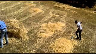 afyon yeşilhisar kasabası karcık mevkii tarla hasat zamanı mehmet yıldız 2013 temmuz