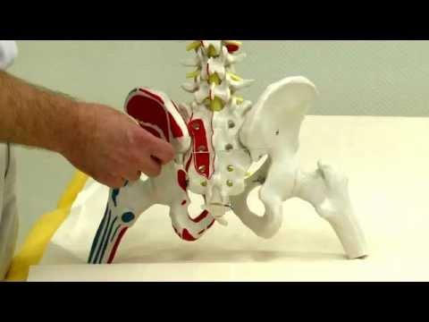 Rozluźnienie mięśni pośladków
