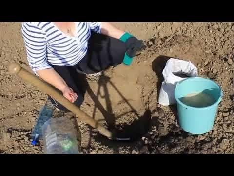 Сеем арбузы в открытый грунт