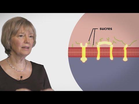 Quelles analyses remettent sur la détection des helminthes