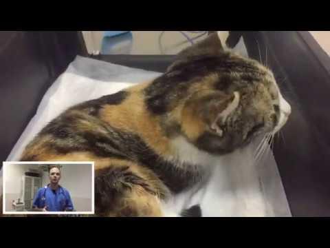 Кошка после наркоза что делать владельцам