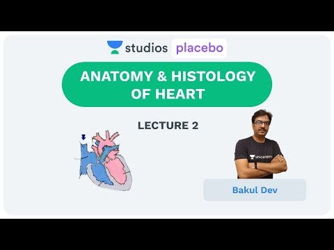 L2: Anatomy & Histology of Heart | Body Fluids and Circulation (Pre-Medical: NEET/AIIMS) | Bakul Dev