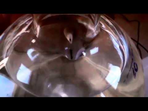 Aceto di sidro di mele per il cancro alla prostata
