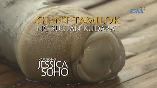 Kapuso Mo, Jessica Soho: Giant Tamilok Ng Sultan Kudarat