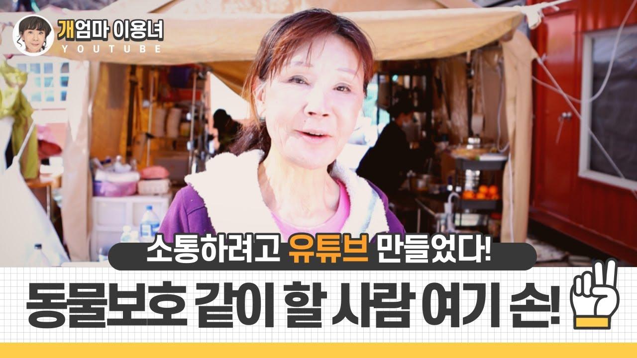 """유기견 대모 이용녀 """"유튜브로 동물 보호 함께해요!"""""""