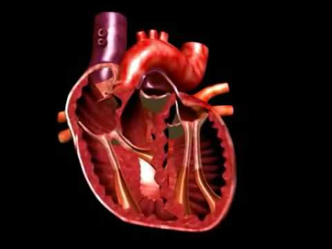3 rizik hipertenzije